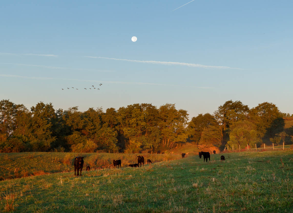 Early morning in the pasture