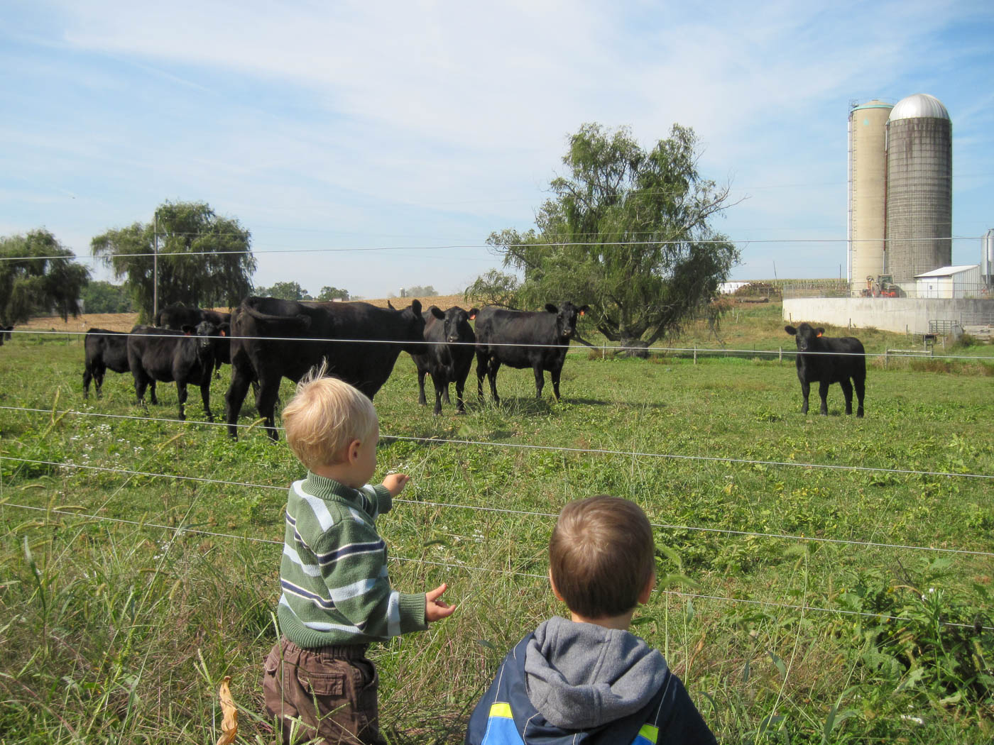 Grandsons inspecting the herd